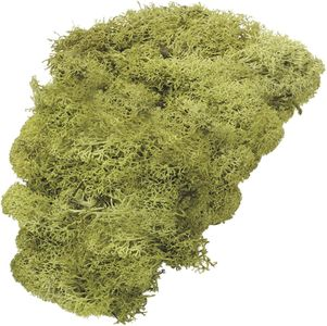 KNORR PRANDELL Islandmoos 50 g grün