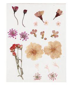 Gepresste Blumen hellrosa
