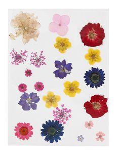 Gepresste Blumen bunt