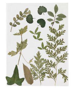 Gepresste Blätter grün